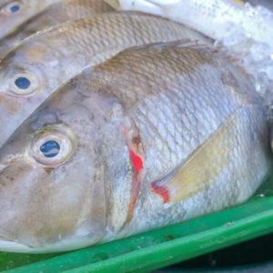 Emperor-fish-nyama-tamu