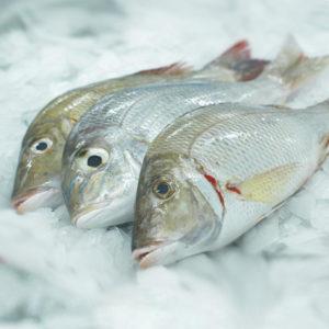 emperor_fish_nyama_tamu
