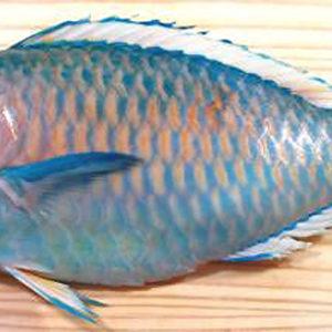 parrot-fish-nyama-tamu3