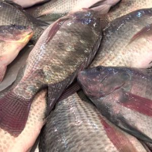 fresh-tilapia-fish-nyama-tamu