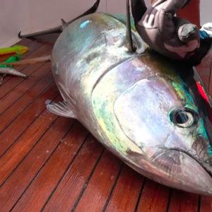 tuna_fish_whole_nyamatamu